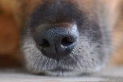 Black dog muzzle. A old black dog muzzle Royalty Free Stock Photos