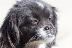 Black dog on the nature Stock Images