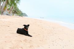 Black dog lay and relax on deserted sand tropical beach. Black dog with orange collar lay and relax on deserted sand tropical beach Stock Photography