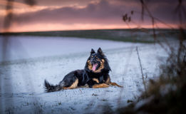 Black dog and outdoor enthusiasm Royalty Free Stock Photo