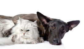 Black dog and persian cat lying together.  Royalty Free Stock Photography