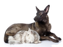 Black dog and persian cat together. Royalty Free Stock Photos