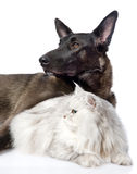 Black dog and persian cat together.  on white background Royalty Free Stock Image