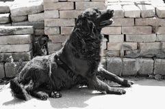 Black dog. Photography of black dog Royalty Free Stock Photo
