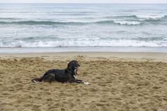 Black dog on the beach stock photography