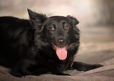 Black dog pooch Stock Photo