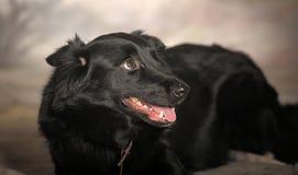 Black dog pooch Stock Photos