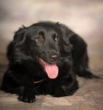 Black dog pooch Royalty Free Stock Image