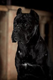 Black dog on the porch at nigh Royalty Free Stock Images