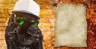 Black dog posed with sunglasses and cap. Stock Image