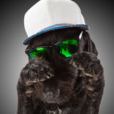 Black dog posed with sunglasses and cap. Royalty Free Stock Photos