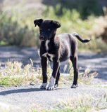 Black dog on the road Stock Images
