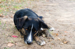 The black dog is sad on the street Royalty Free Stock Photos