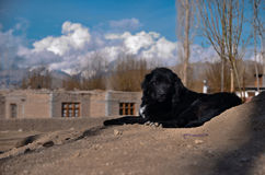 Black dog on the sand. With local house background Royalty Free Stock Photo