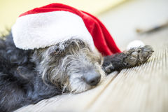 Black dog with santa hat Stock Photography