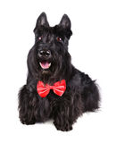 Black dog Royalty Free Stock Image