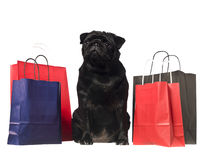 Black dog with shopping bags. Isolated on white stock images