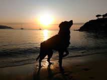 Silhouette of a dog in the sunset on the beach. royalty free stock photography