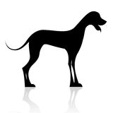 Black dog silhouette Stock Image