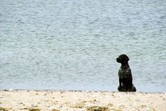 Black dog sits on a beach. Image of black dog sits on a beach Stock Photo