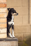 The black dog sits on a pedestal Royalty Free Stock Photo