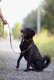 The black dog sits. Stock Photos