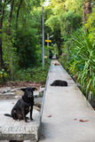 A black dog sits on the walkway Royalty Free Stock Photo