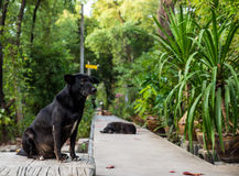 A black dog sits on the walkway Stock Image