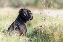 Black Dog Sitting In The Meadow Near Nice Bent Plants Stock Image