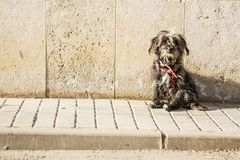 Black dog at the sun. Black dog sitting on a sidewalk in the morning sun royalty free stock images