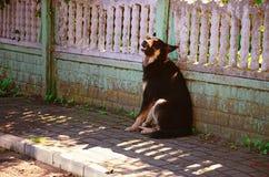 Black Dog Sitting on a Village Street near a Fence Royalty Free Stock Image