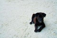 A  black dog sitting on the white sand beach. A  black dog sitting on the white sand beach at the sea Royalty Free Stock Image