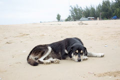 Black dog sleep on beach Stock Photos