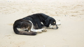 Black dog sleep on beach Stock Photo