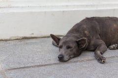 Black dog sleep on the ground. The wild black dog sleep alone on the ground Stock Photos