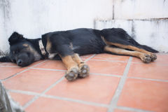 Black dog sleeping Stock Photography