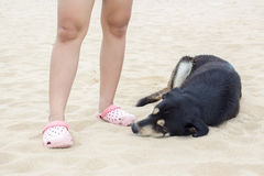 Black  dog sleeping near people on beach Stock Images