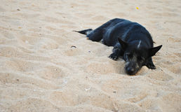 Black dog sleeping on sand beach Royalty Free Stock Photography