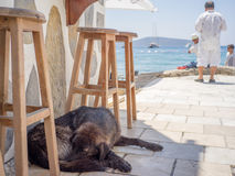 Black Dog Sleeping under Stools by Aegean Sea. With tourists in background enjoying sea view in strong sunlight, a homeless black dog is sleeping in shadow under stock images