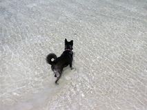 Black dog stands in the water of the lake and waiting stock photos