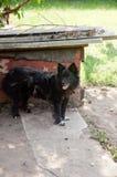 Black dog staying near doghouse Royalty Free Stock Image