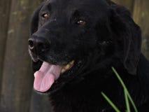 Black dog. Of the street of Algarrobo, Chile royalty free stock photos