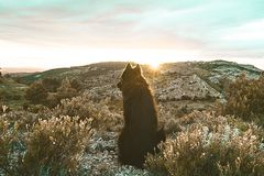 Black dog at sunset royalty free stock photography