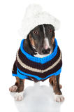 Black dog in a sweater and a hat Royalty Free Stock Photos