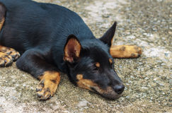 Black dog waiting for the owner to get away with loneliness. Stock Photos