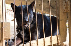 Black dog was left in the cage. Stock Photos
