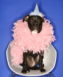 Black dog wearing party hat and feather boa. Royalty Free Stock Photos