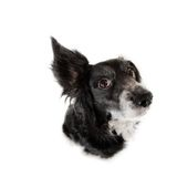 Black dog. This is a black dog on a white background Stock Photos