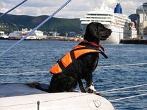 Black dog wih life jacket on sail boat. In harbor Bodo, Norway royalty free stock photos