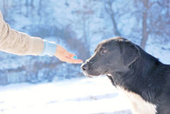 Black dog in winter Stock Photography